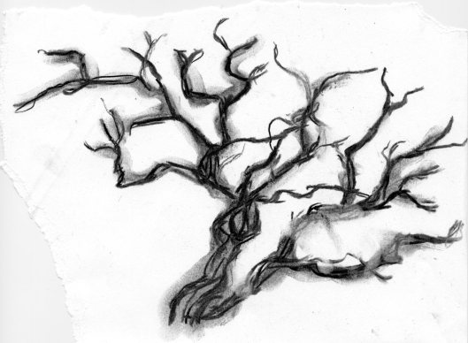 Tree in Charcoal