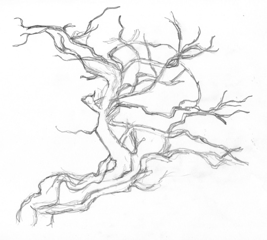 Tree in pencil